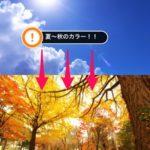 【文京区】夏明けのカラーに悩む方へ!