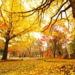 【秋カラー】色持ちを良くする方法4選